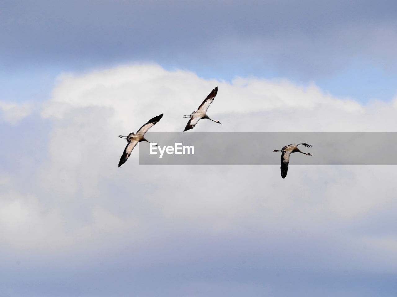 animal themes, animals in the wild, flying, animal wildlife, sky, bird, animal, cloud - sky, vertebrate, group of animals, mid-air, spread wings, low angle view, beauty in nature, nature, no people, day, motion, outdoors, zoology, flock of birds