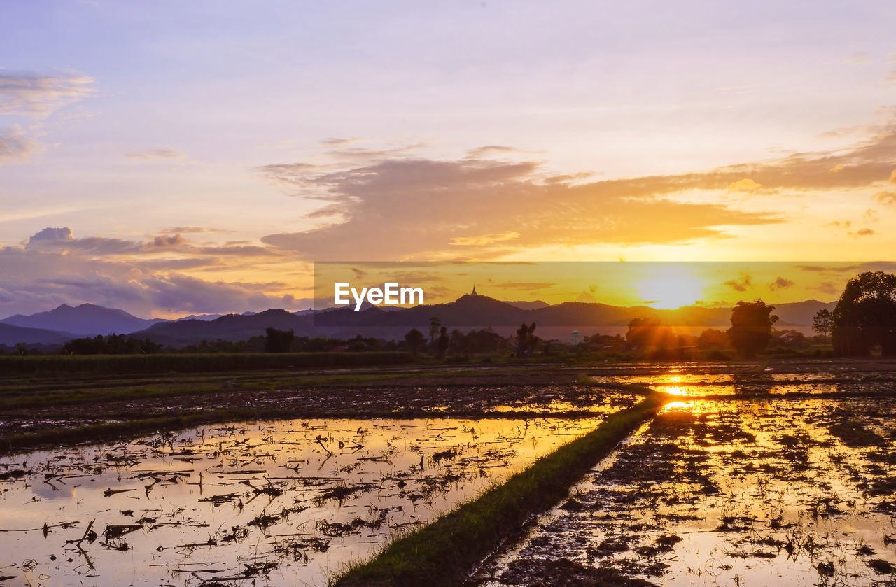 sunset, sky, scenics - nature, cloud - sky, beauty in nature, nature, land, landscape, field, environment, water, agriculture, orange color, tranquil scene, rural scene, tranquility, farm, no people, sunlight, sun, outdoors, plantation