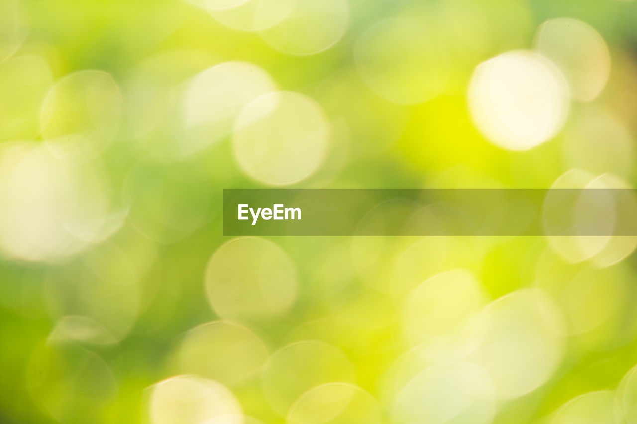 defocused, lens flare, backgrounds, no people, green color, nature, full frame, close-up, outdoors, beauty in nature, sunlight, circle, glowing, plant, day, abstract, selective focus, light - natural phenomenon, pattern, shape, bright