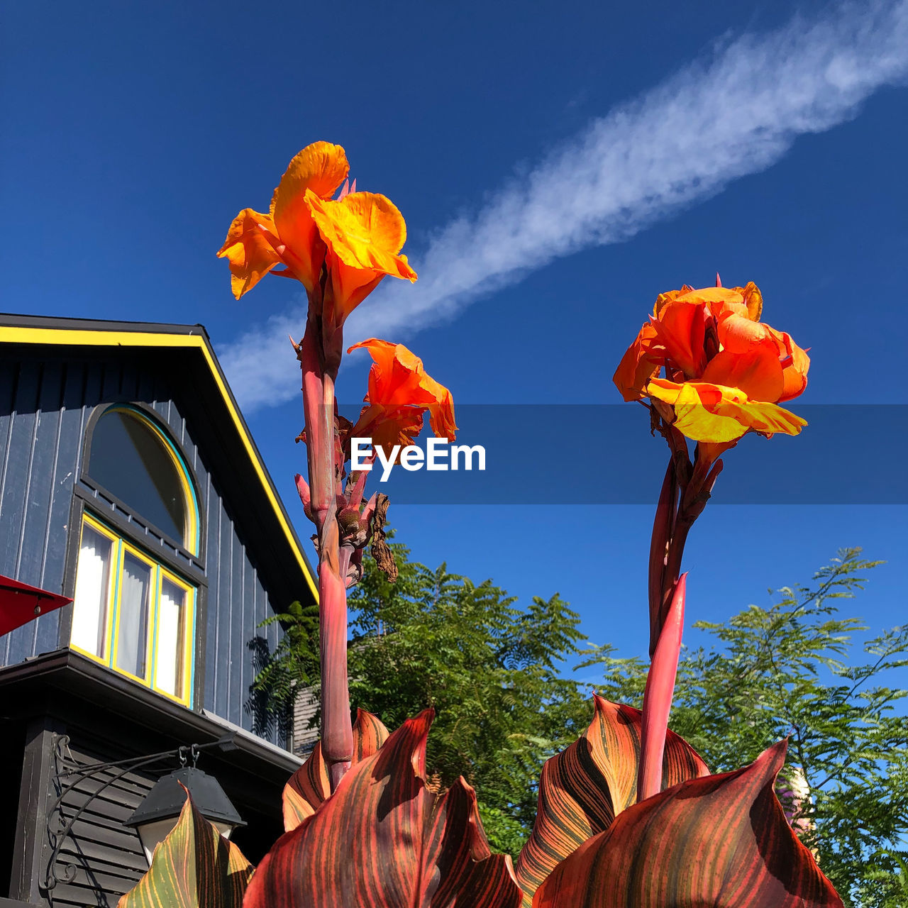 sky, low angle view, architecture, nature, built structure, plant, building exterior, flowering plant, orange color, flower, no people, growth, beauty in nature, building, day, outdoors, petal, vulnerability, fragility, close-up, flower head