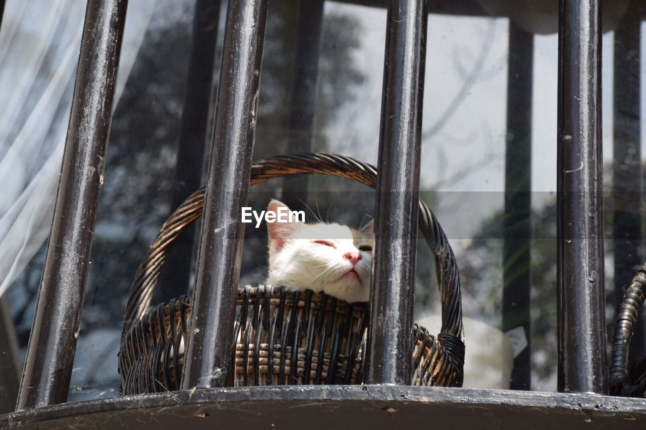 Low Angle View Of Cat In Basket By Security Bars