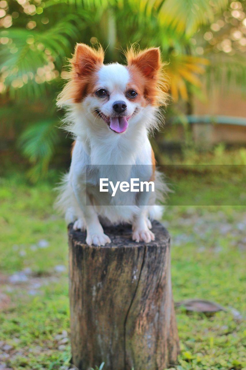 PORTRAIT OF DOG LYING ON FIELD