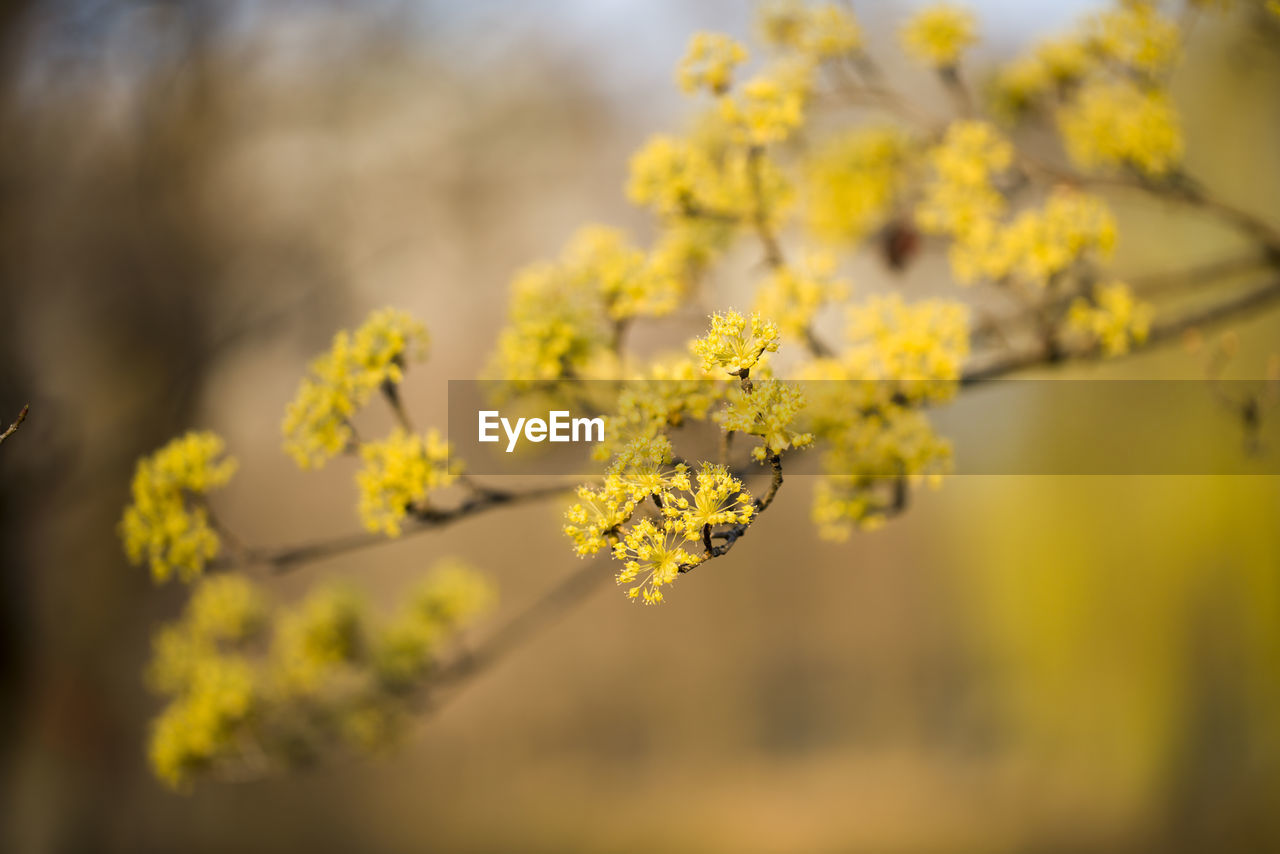 flower, flowering plant, yellow, plant, growth, vulnerability, fragility, beauty in nature, freshness, close-up, selective focus, day, nature, focus on foreground, no people, springtime, outdoors, tree, oilseed rape, tranquility, flower head
