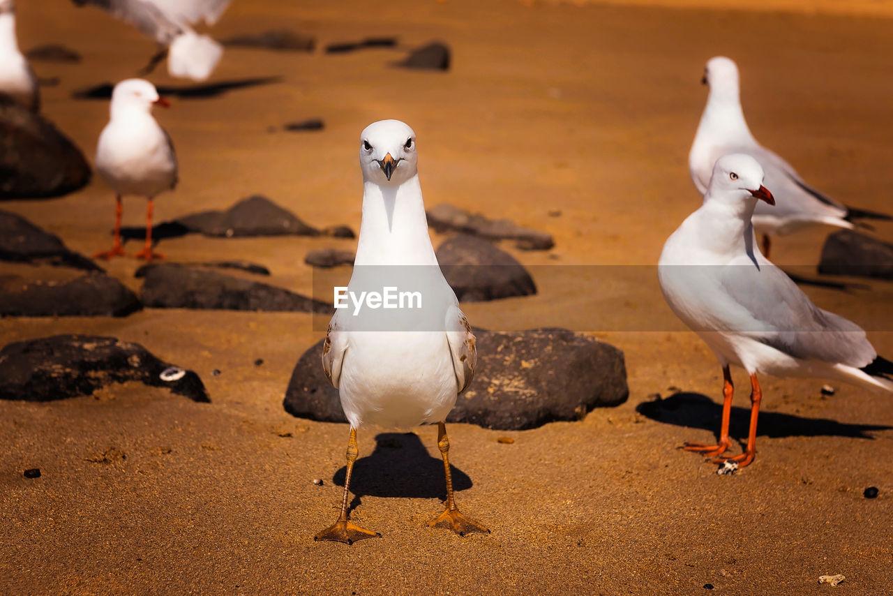 Seagulls on sand at beach