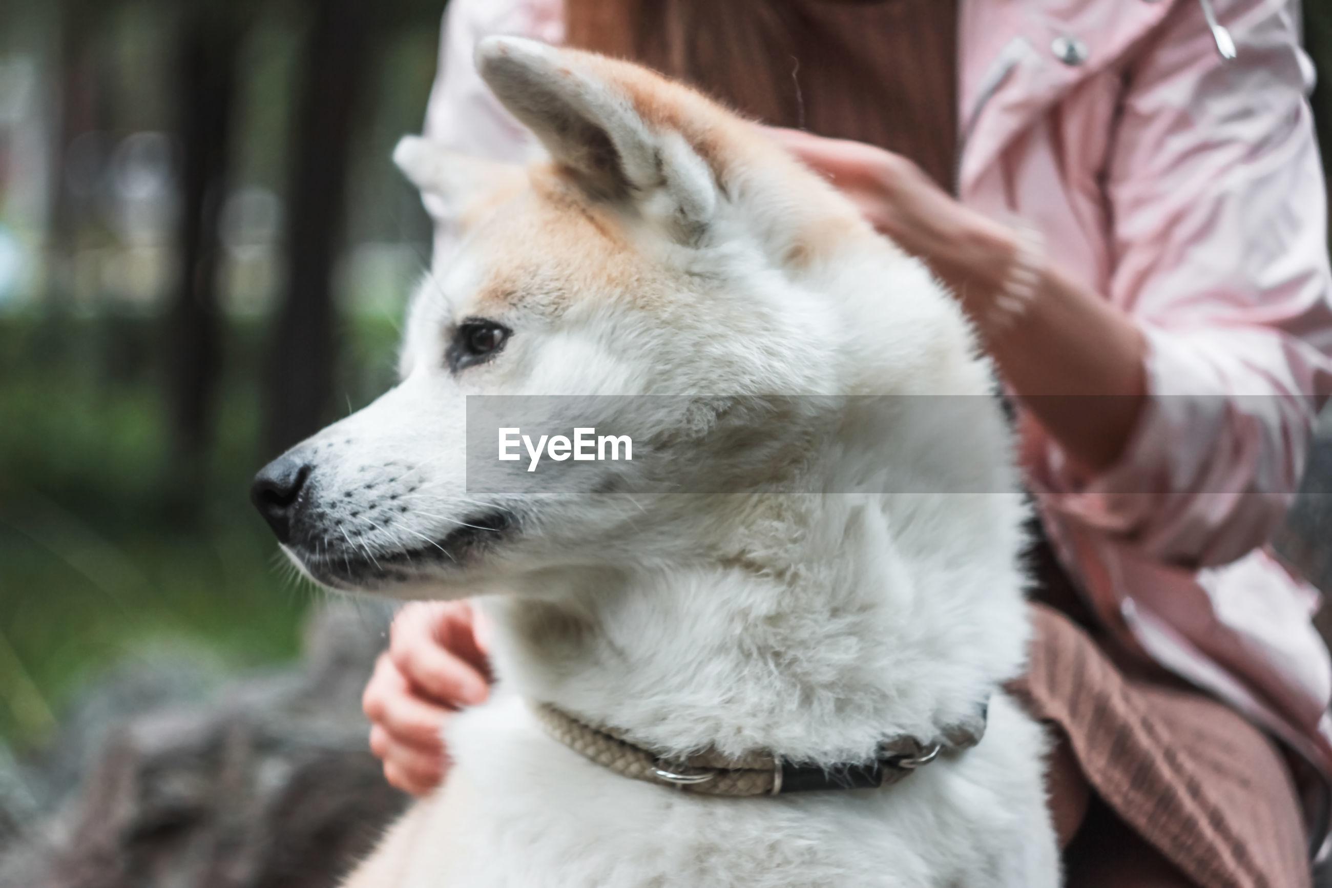 CLOSE-UP OF DOG LOOKING AT CAMERA WHILE HAND