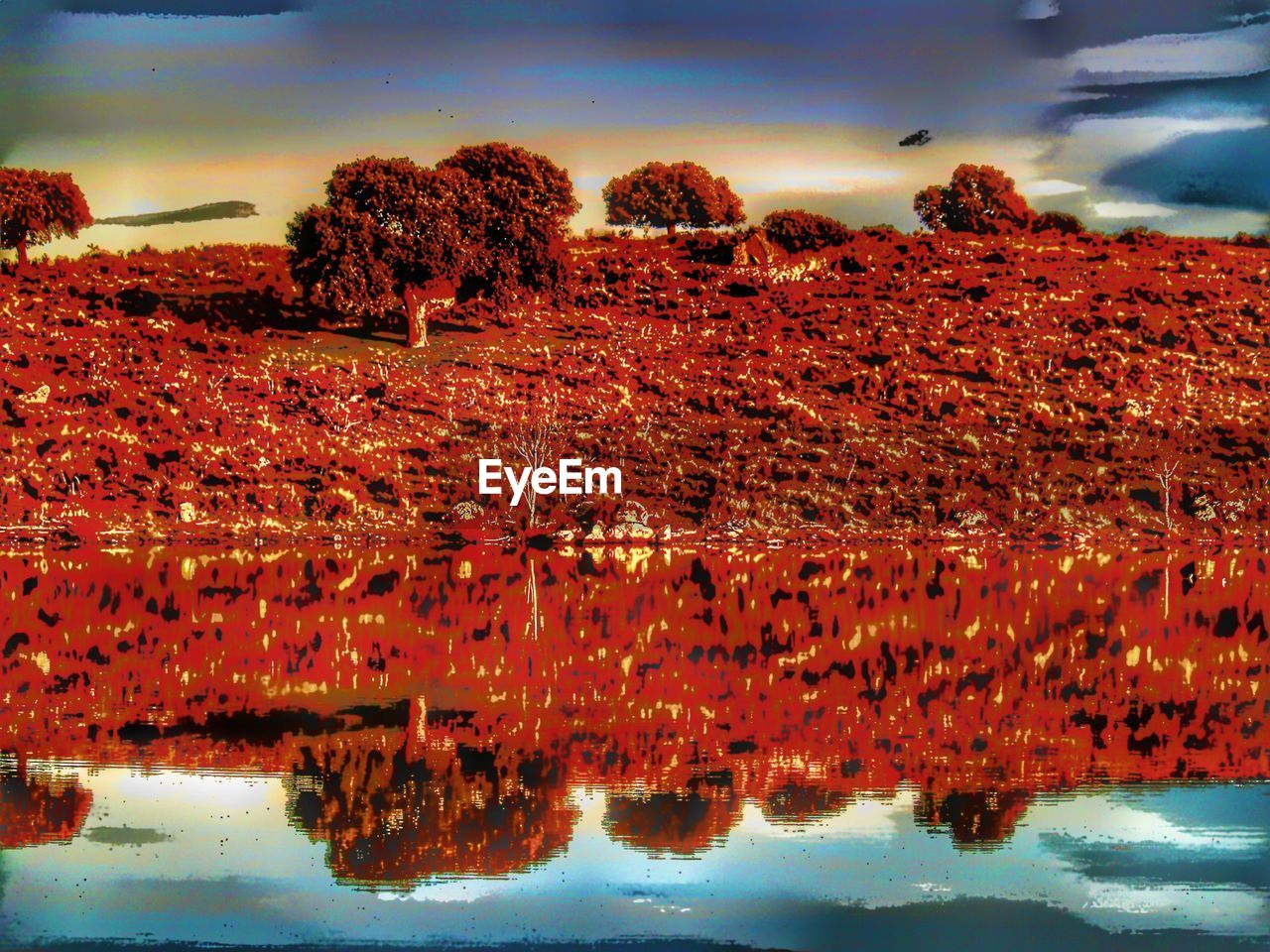 sky, reflection, red, cloud - sky, no people, nature, water, beauty in nature, outdoors, scenics, day, tree, close-up
