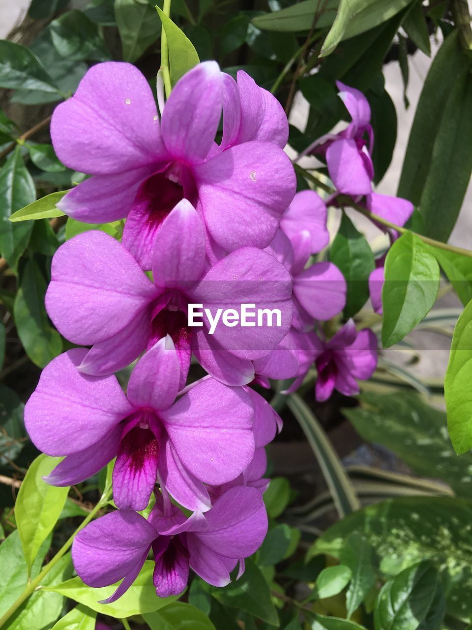 flower, petal, beauty in nature, fragility, nature, growth, pink color, no people, plant, outdoors, freshness, flower head, day, leaf, blooming, close-up, periwinkle