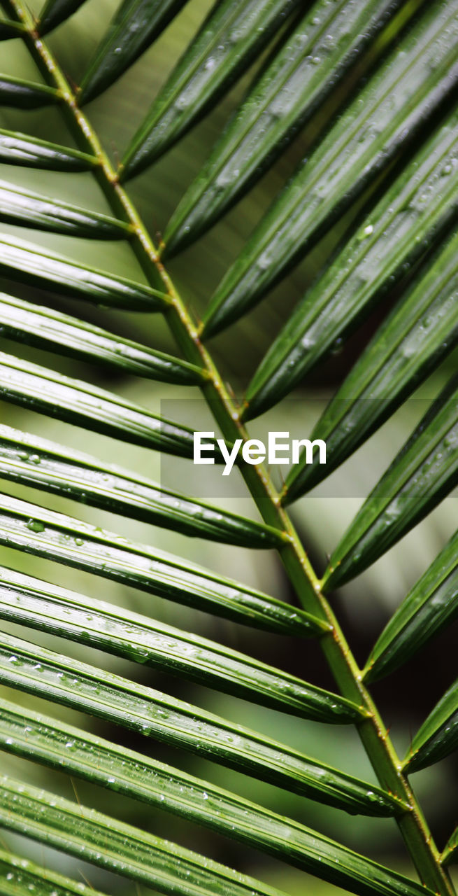 green color, nature, leaf, close-up, growth, beauty in nature, no people, day, frond, plant, outdoors, palm tree, freshness, tree