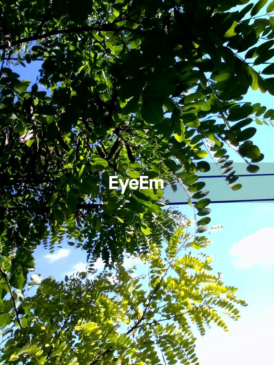 tree, growth, low angle view, nature, leaf, green, no people, beauty in nature, environment, day, branch, green color, outdoors, plant, sky, tranquility, clear sky, freshness