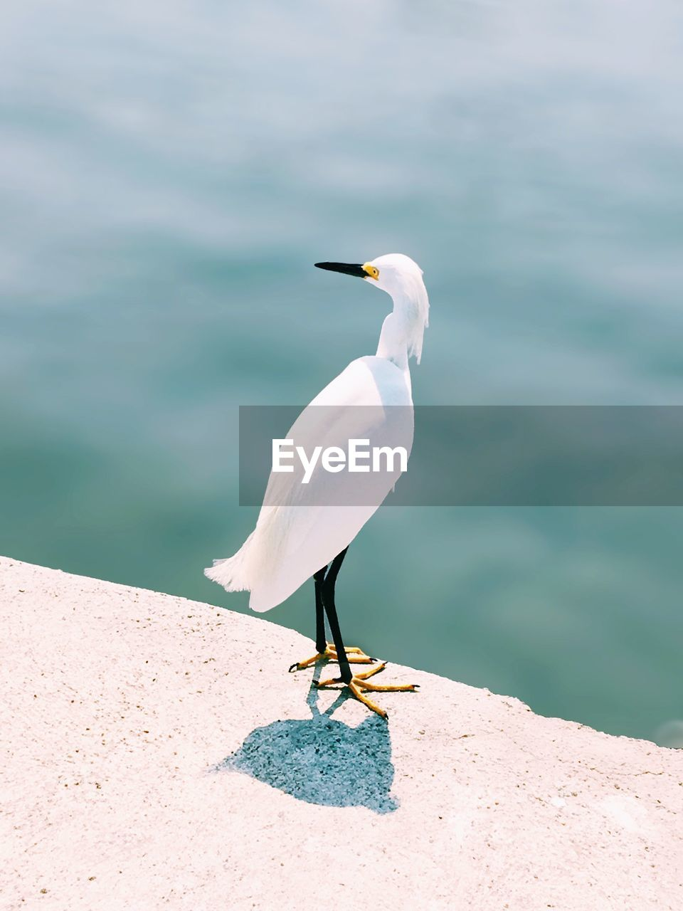 animals in the wild, animal wildlife, animal themes, animal, vertebrate, bird, one animal, water, day, sea, perching, no people, nature, white color, focus on foreground, beauty in nature, sunlight, egret, outdoors