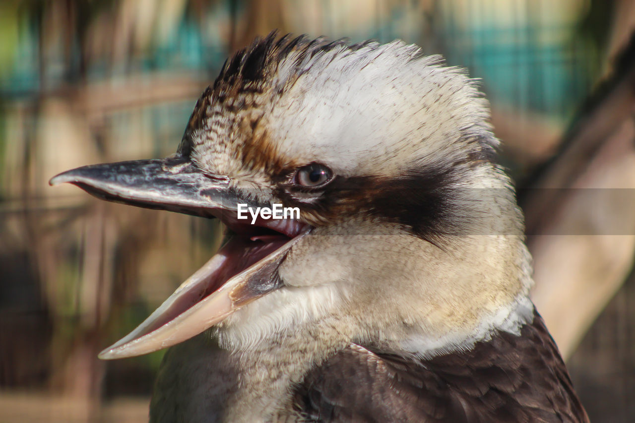vertebrate, bird, animal themes, animal, one animal, close-up, focus on foreground, animal wildlife, animals in the wild, beak, no people, day, looking, animal body part, looking away, outdoors, animal head, nature, duck, white color, profile view, mouth open, animal eye