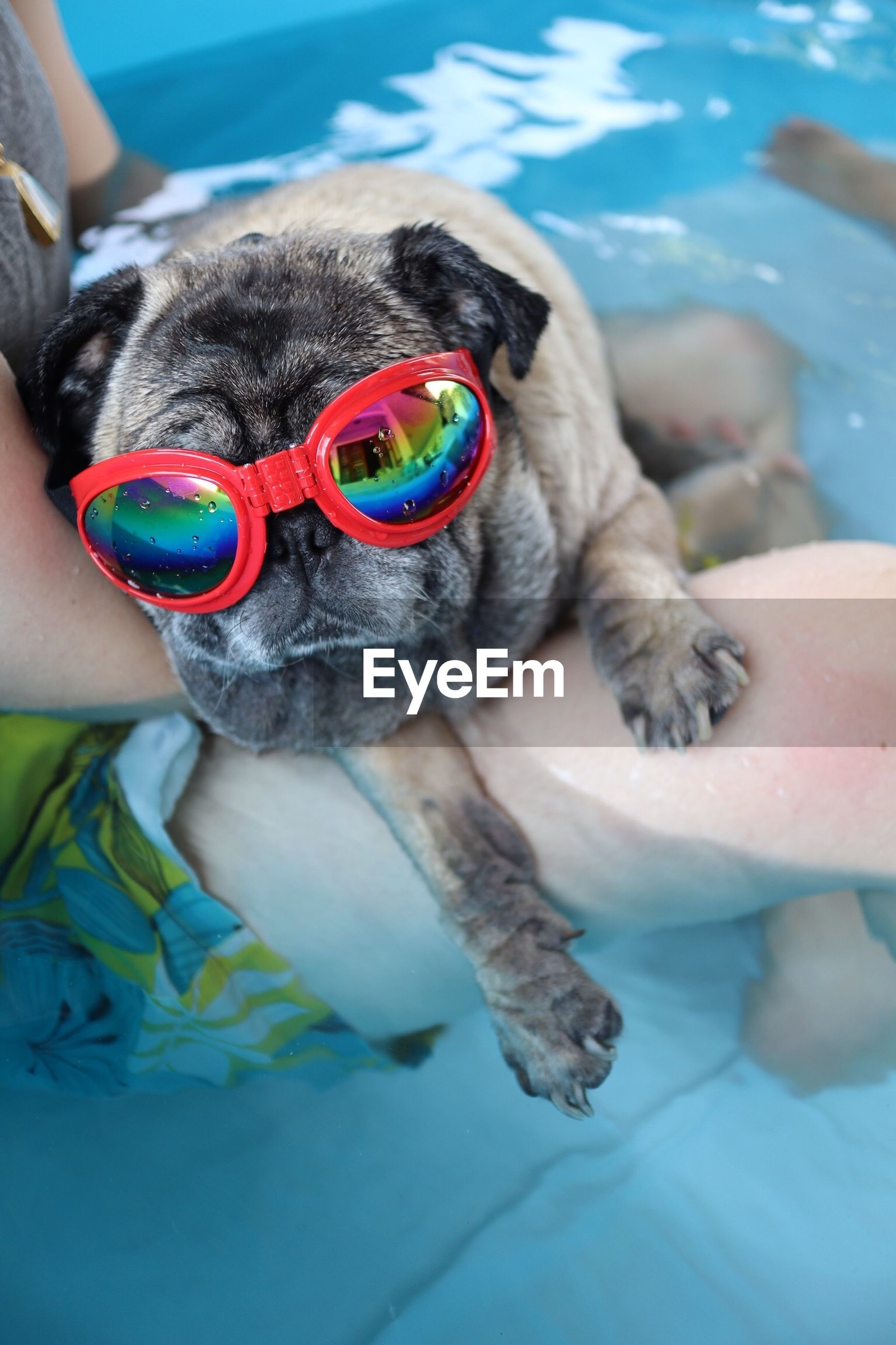 MIDSECTION OF PERSON HOLDING DOG WITH SWIMMING POOL
