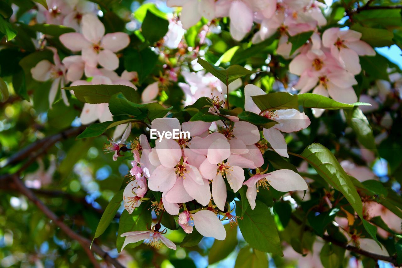Low angle view of fresh pink flowers blooming in park
