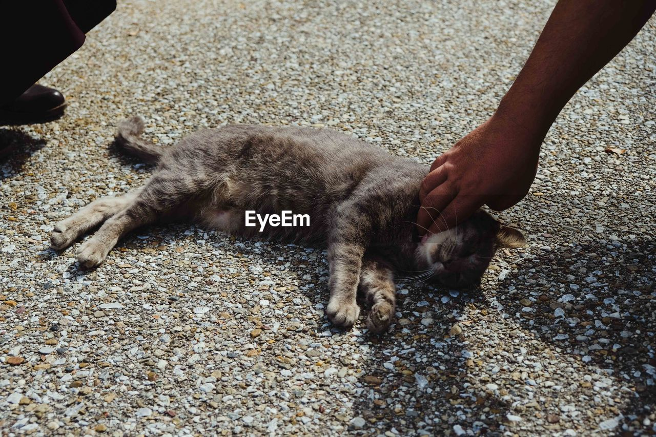 mammal, domestic, pets, domestic animals, one animal, vertebrate, one person, human hand, real people, hand, cat, human body part, feline, domestic cat, day, high angle view, unrecognizable person, outdoors, pet owner, finger