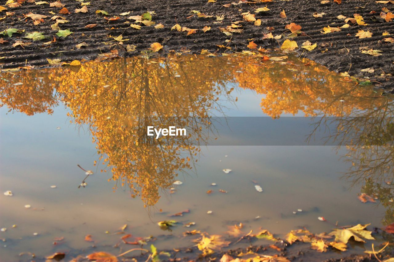 leaf, autumn, change, water, reflection, nature, leaves, lake, outdoors, waterfront, standing water, no people, day, beauty in nature, tranquility, maple, tranquil scene, floating on water, tree, maple leaf, yellow, lily pad, close-up, scenics, growth, puddle, sky