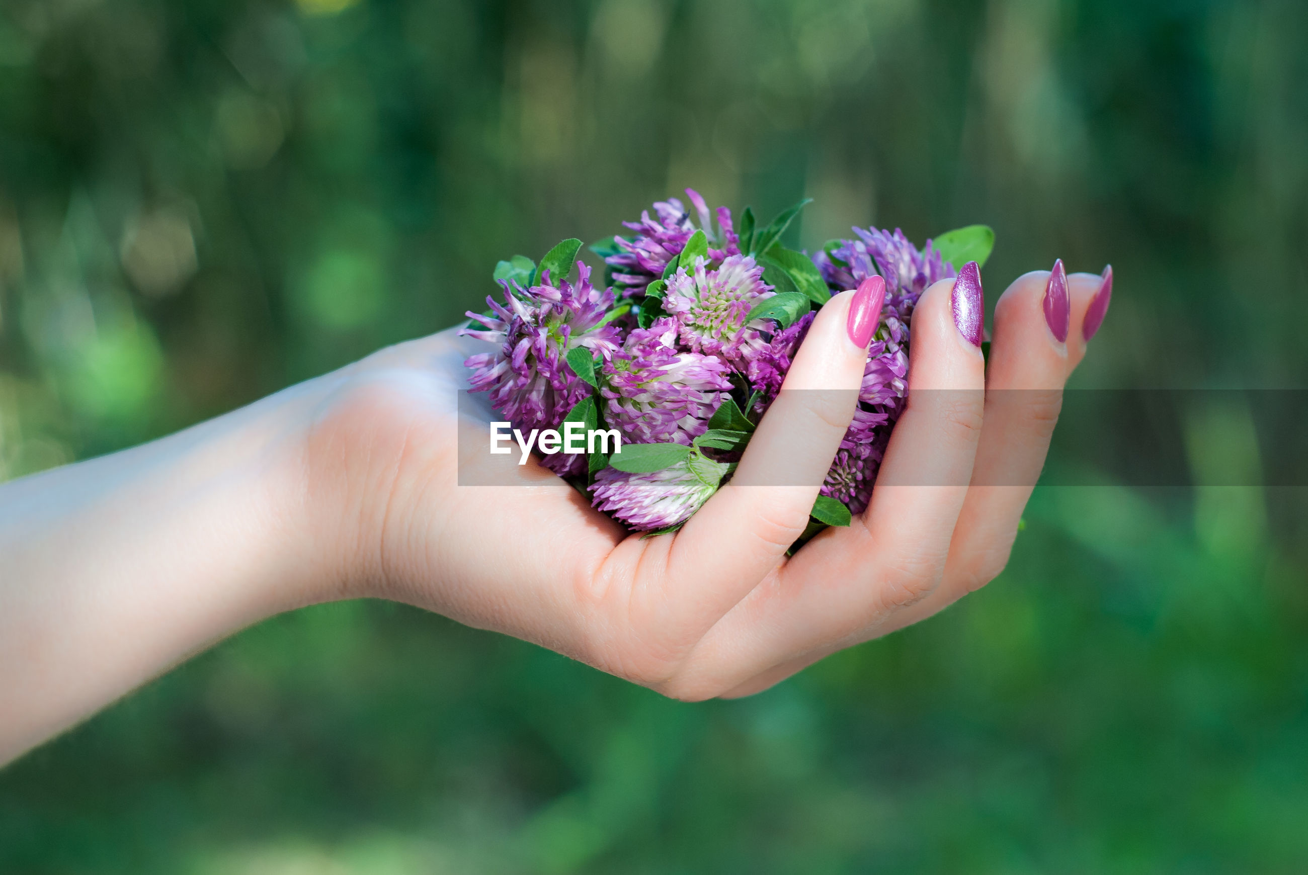 CLOSE-UP OF HAND HOLDING PURPLE FLOWERING PLANTS