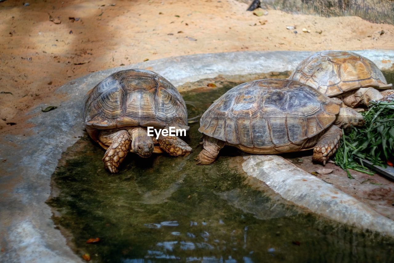 Close-up of turtles in water