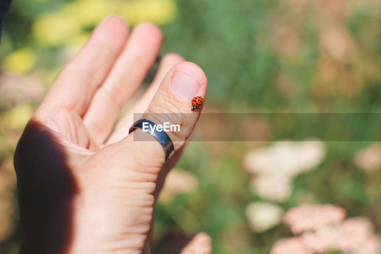 Observing a lady bug, close up on hands Bug California Candid Photography Close-up Day Finger Ring Focus On Foreground Holding Human Body Part Human Finger Human Hand Insect Ladybug Nature One Person Outdoors People Real People USA