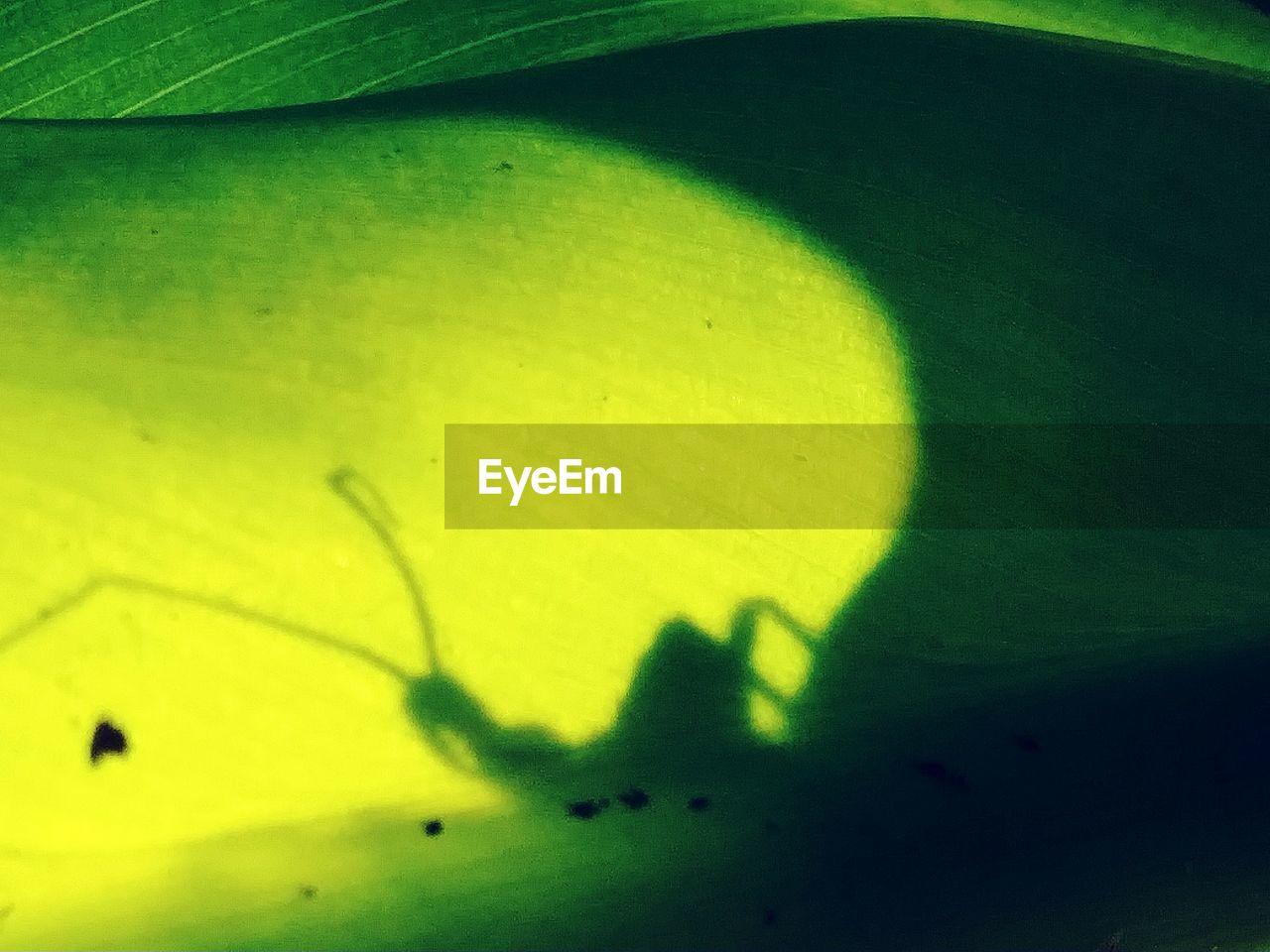 green color, nature, leaf, no people, plant part, plant, close-up, yellow, beauty in nature, full frame, day, water, shadow, freshness, growth, outdoors, animal wildlife, backgrounds, animal, leaves, focus on shadow