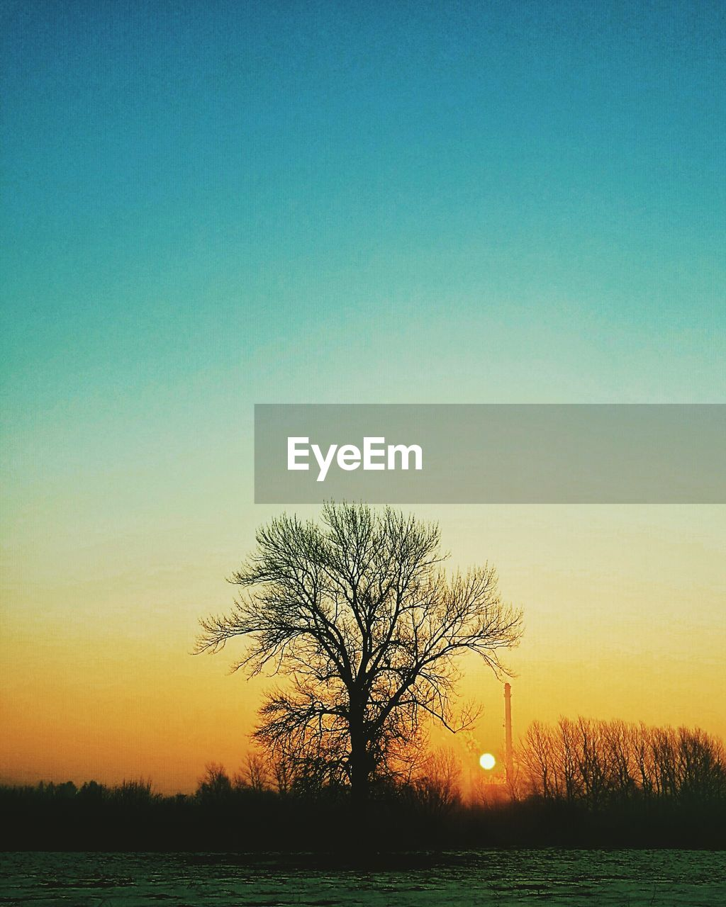 bare tree, tree, sunset, tranquility, beauty in nature, tranquil scene, scenics, nature, silhouette, landscape, sky, clear sky, outdoors, no people, lone, day