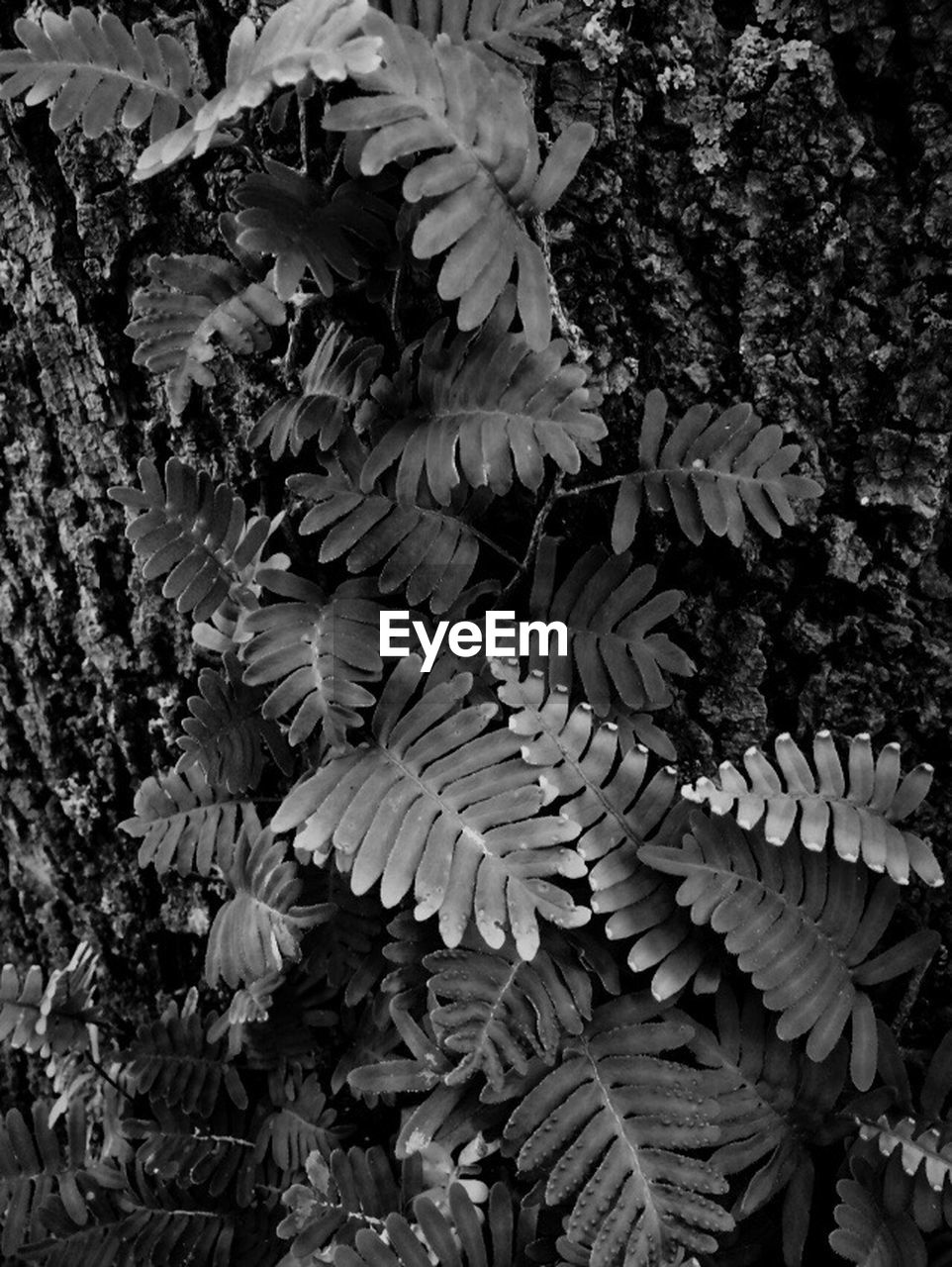 plant, growth, nature, beauty in nature, no people, tree, close-up, leaf, plant part, day, vulnerability, fragility, outdoors, flower, flowering plant, tranquility, fern, freshness, botany, branch