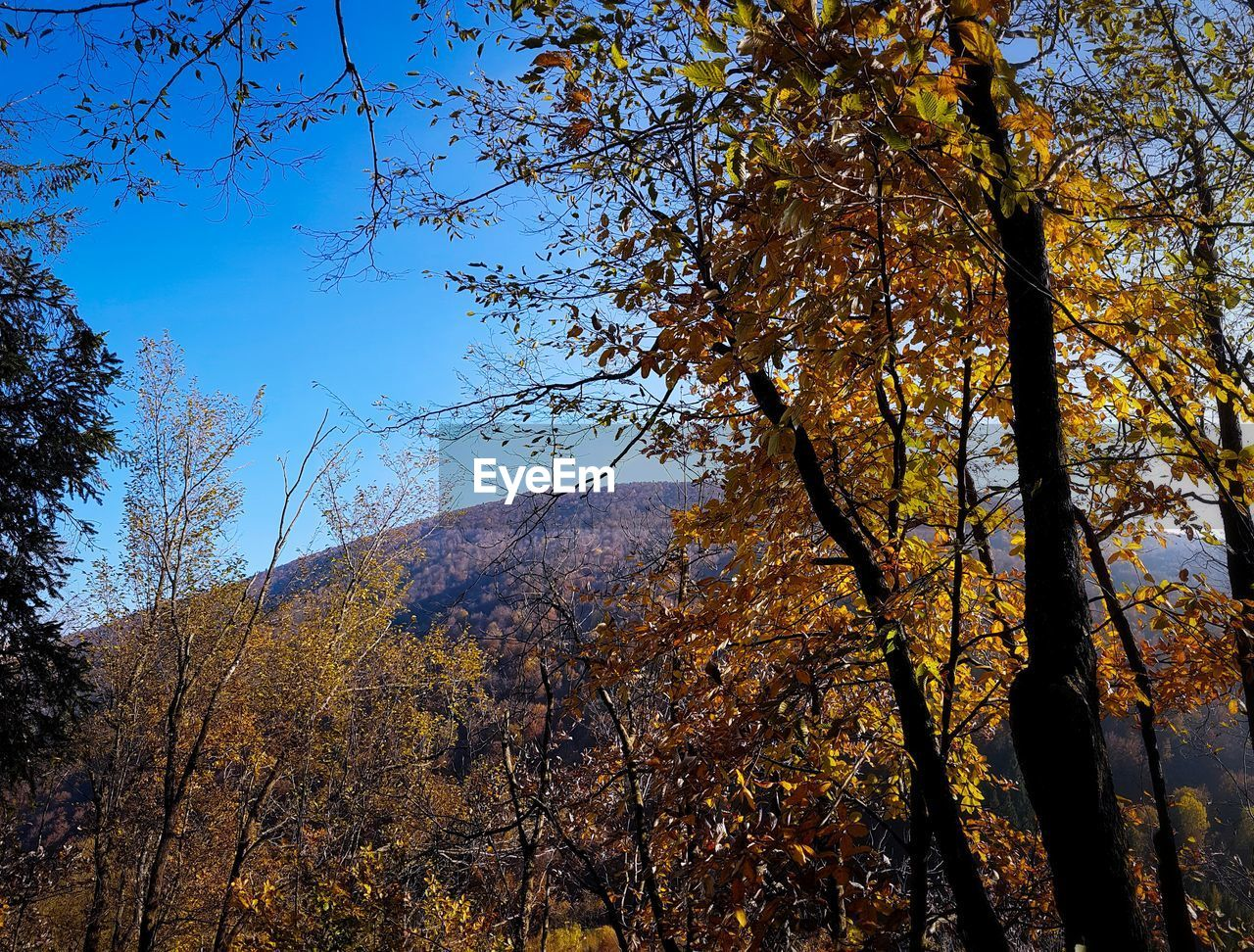 tree, autumn, beauty in nature, nature, branch, change, tranquility, growth, leaf, tranquil scene, day, scenics, no people, outdoors, low angle view, sky, forest, mountain