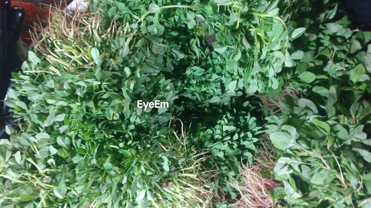 growth, plant, green color, nature, leaf, beauty in nature, freshness, no people, outdoors, day, close-up