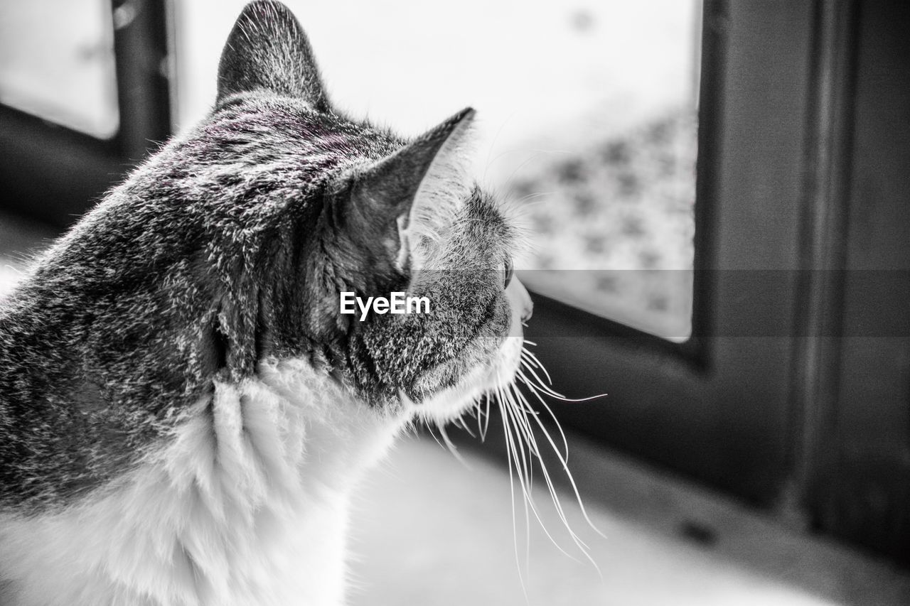 pets, one animal, domestic, mammal, domestic animals, animal, cat, animal themes, domestic cat, feline, vertebrate, close-up, indoors, focus on foreground, whisker, no people, looking, animal body part, looking away, home interior, animal head