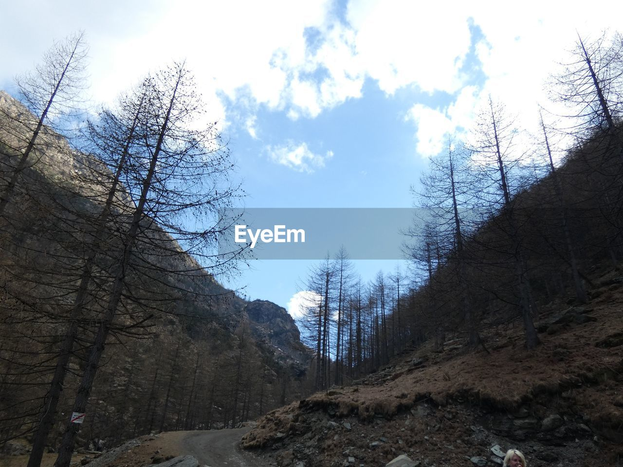 tree, sky, plant, cloud - sky, tranquility, nature, day, bare tree, low angle view, scenics - nature, beauty in nature, tranquil scene, non-urban scene, no people, mountain, land, outdoors, branch, landscape, rock
