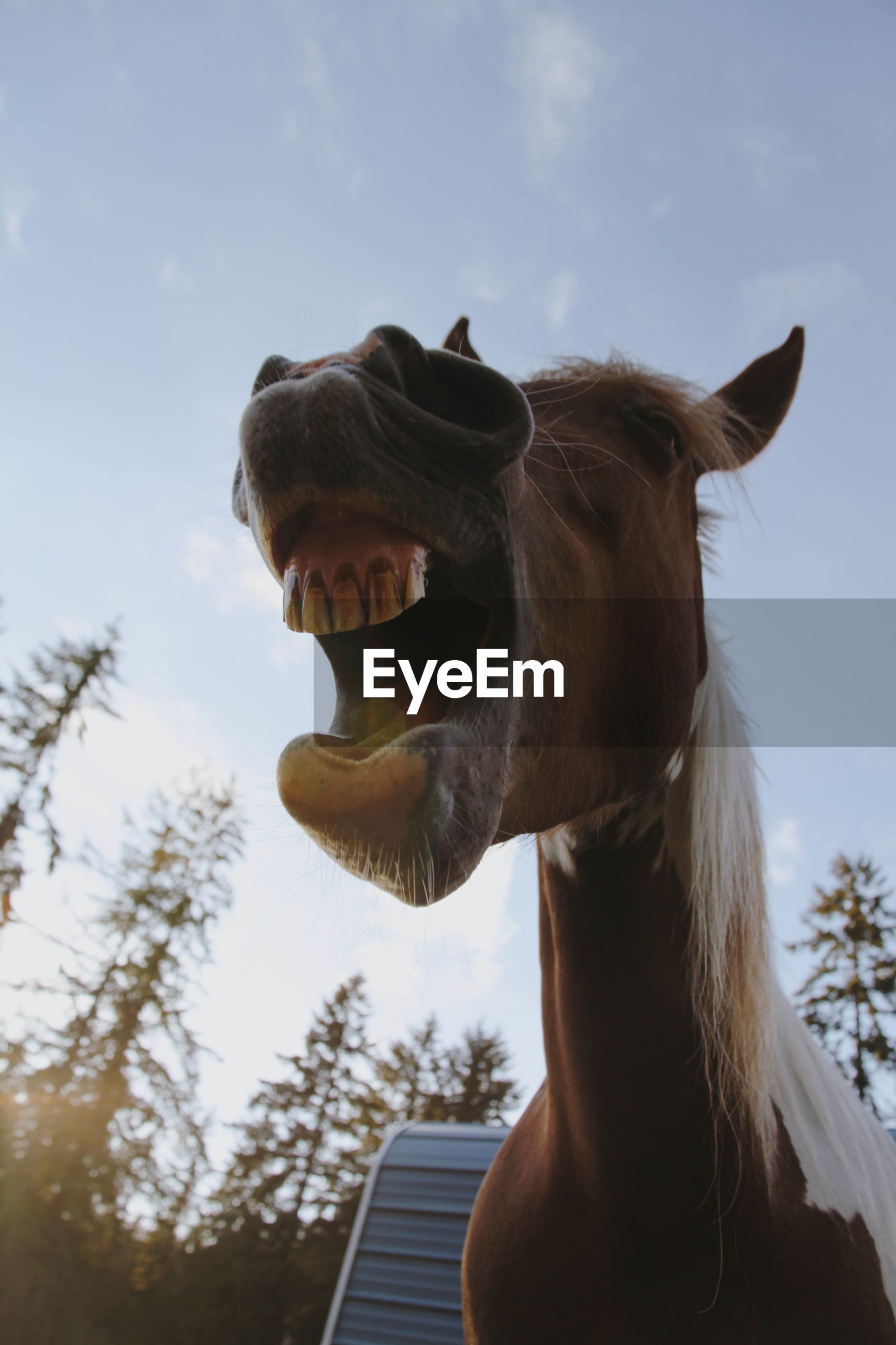Low angle view of horse against sky