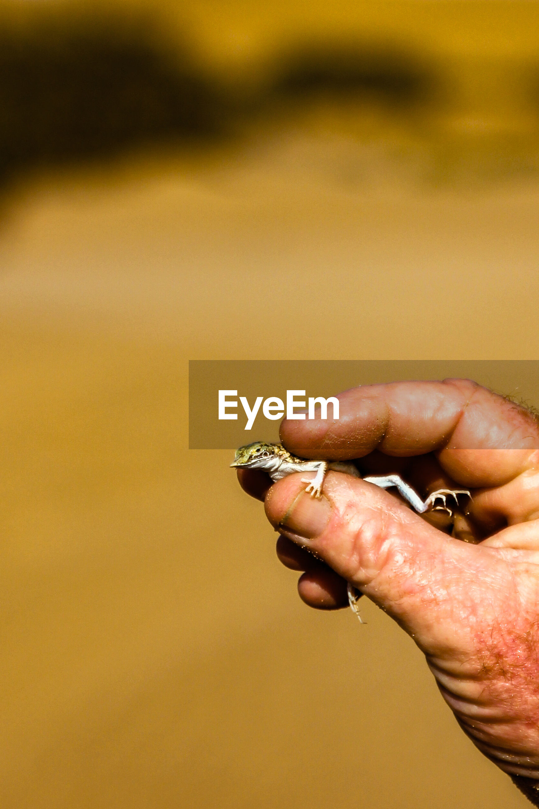 CLOSE-UP OF HANDS HOLDING CIGARETTE