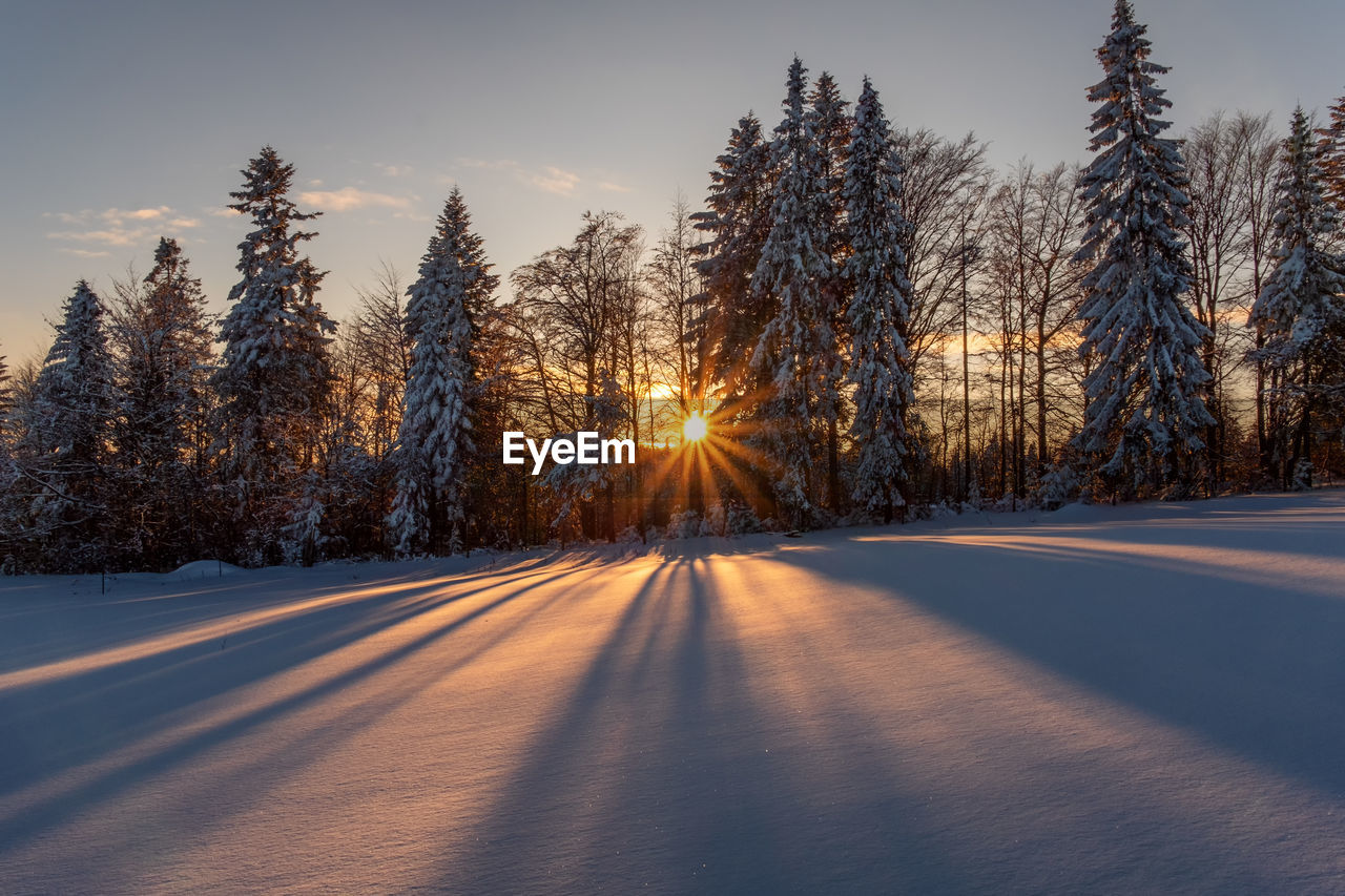 TREES BY SNOW COVERED ROAD DURING SUNSET