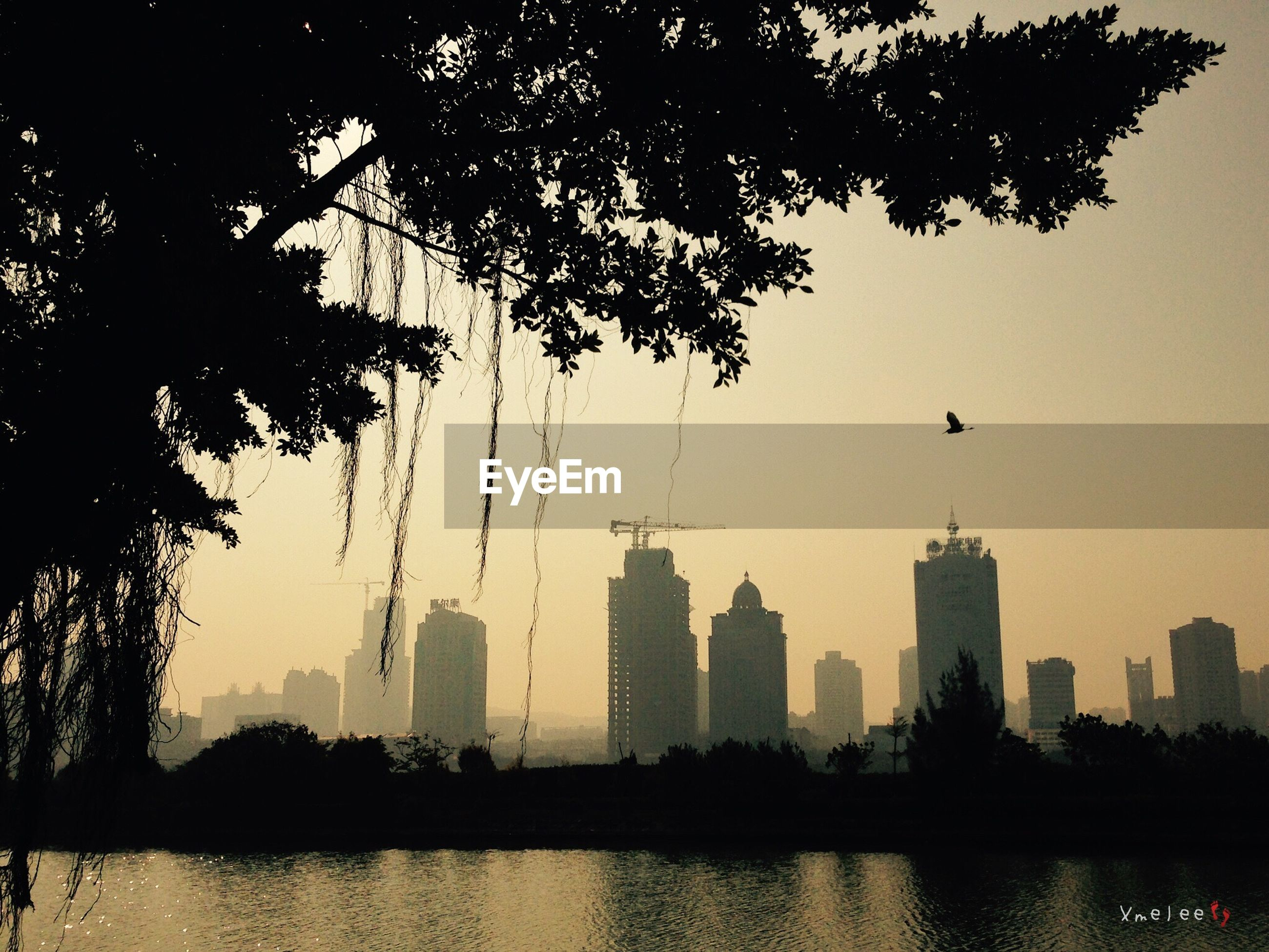 building exterior, architecture, city, built structure, skyscraper, tree, cityscape, silhouette, bird, water, waterfront, river, urban skyline, reflection, tower, sky, tall - high, modern, flying, sunset