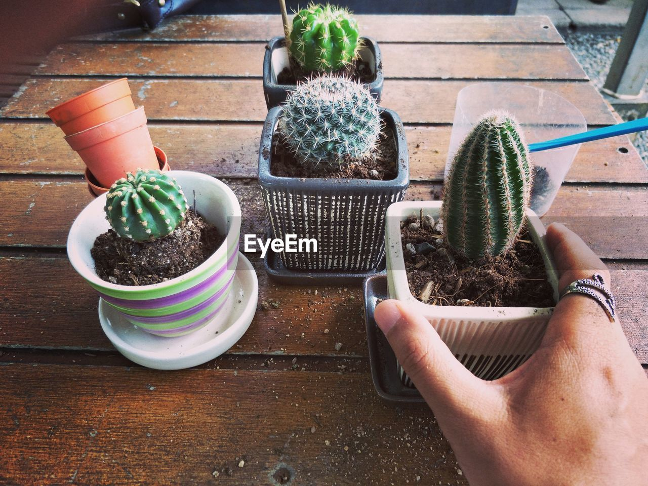 potted plant, human hand, hand, real people, one person, holding, human body part, lifestyles, table, high angle view, food and drink, growth, unrecognizable person, plant, gardening, day, food, women, green color, finger, planting, flower pot