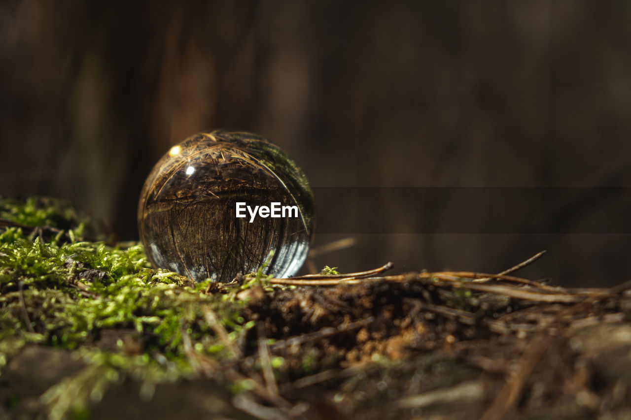 Environment concept, a crystal ball lies on a moss in the forest, reflection of the forest.
