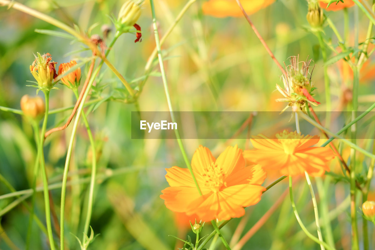 flower, nature, growth, plant, petal, beauty in nature, blooming, no people, flower head, fragility, freshness, outdoors, close-up, day