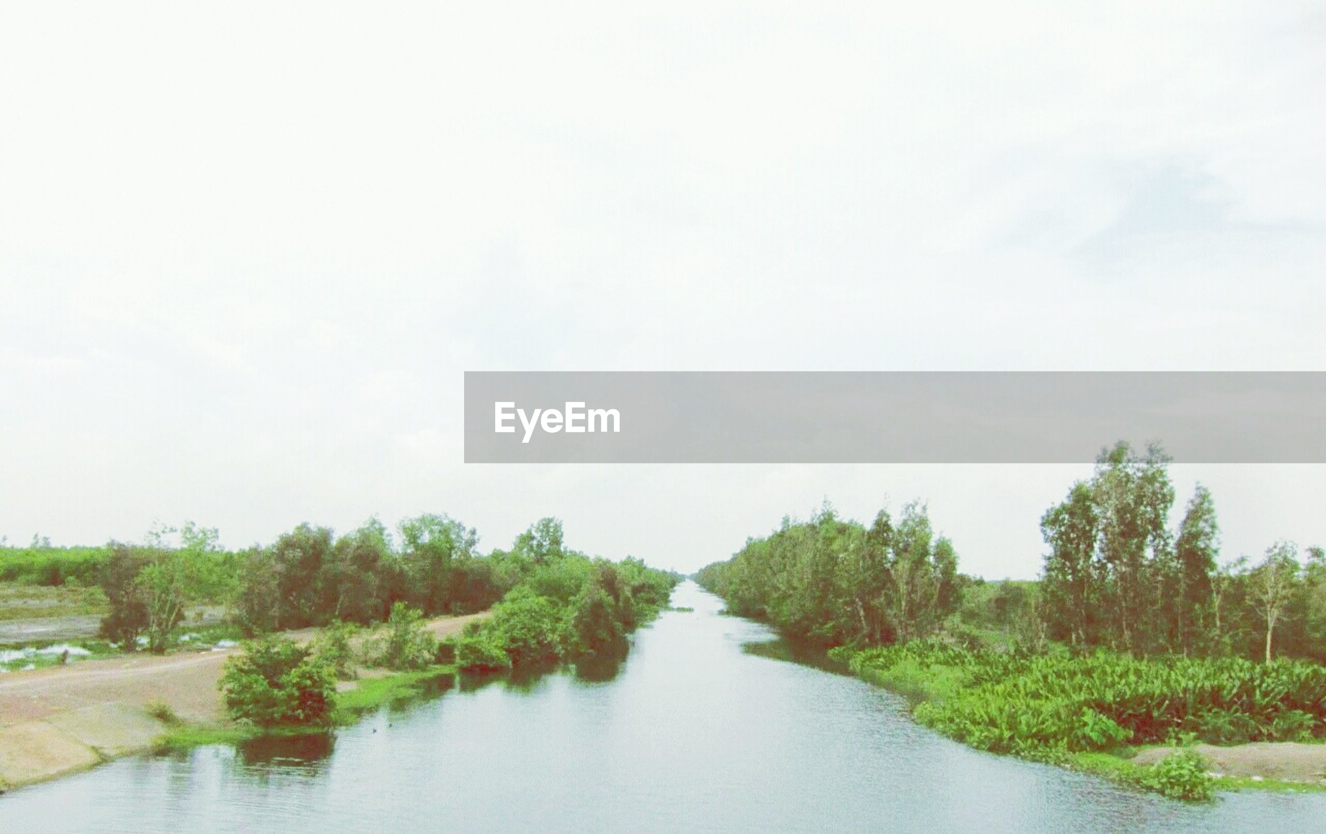 tree, water, tranquility, tranquil scene, scenics, beauty in nature, nature, clear sky, sky, growth, waterfront, copy space, river, green color, grass, landscape, lake, day, idyllic, plant