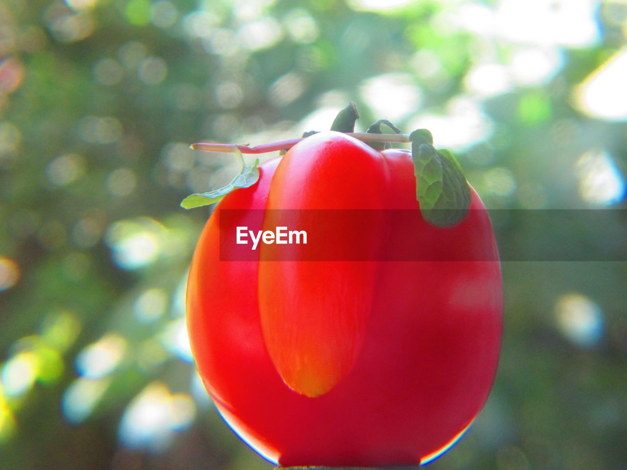 red, nature, focus on foreground, close-up, growth, no people, day, beauty in nature, vegetable, outdoors, freshness, plant, fragility, food, tree