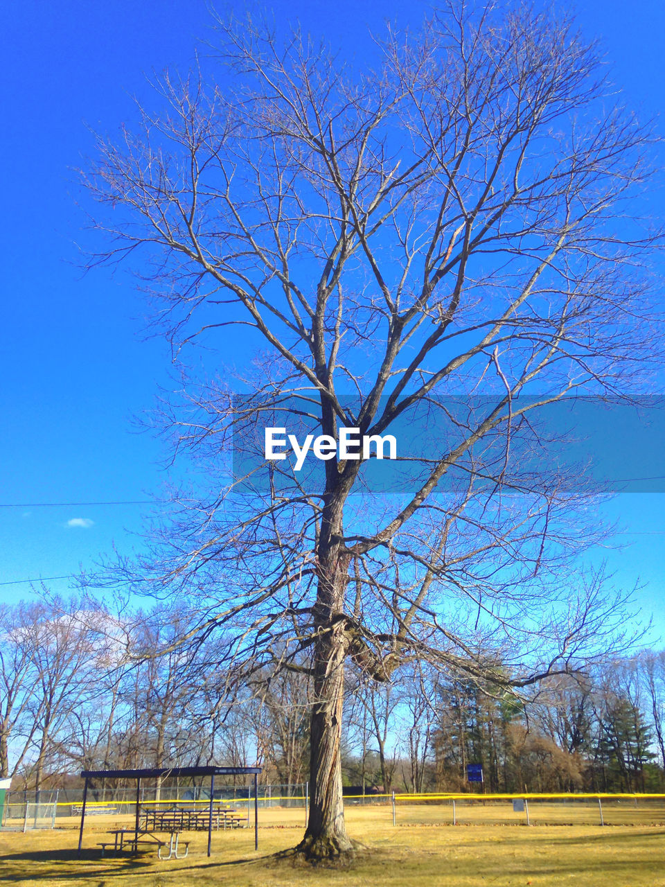 tree, plant, bare tree, blue, landscape, sky, tranquility, field, tranquil scene, nature, scenics - nature, land, no people, branch, environment, day, beauty in nature, clear sky, outdoors, non-urban scene
