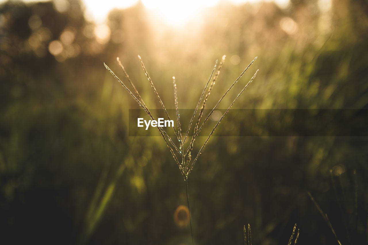 plant, focus on foreground, growth, beauty in nature, close-up, no people, nature, tranquility, day, wet, outdoors, water, selective focus, drop, sunlight, land, fragility, vulnerability, freshness, blade of grass, dew