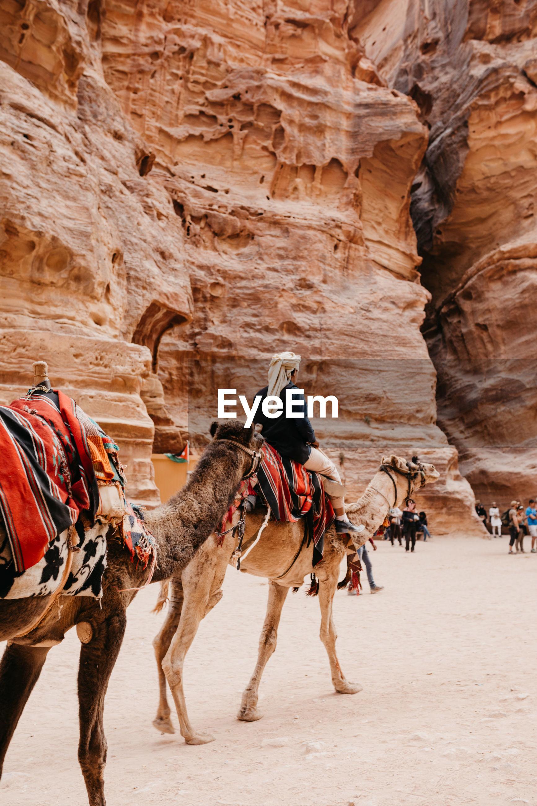 FULL LENGTH OF A HORSE ON DESERT
