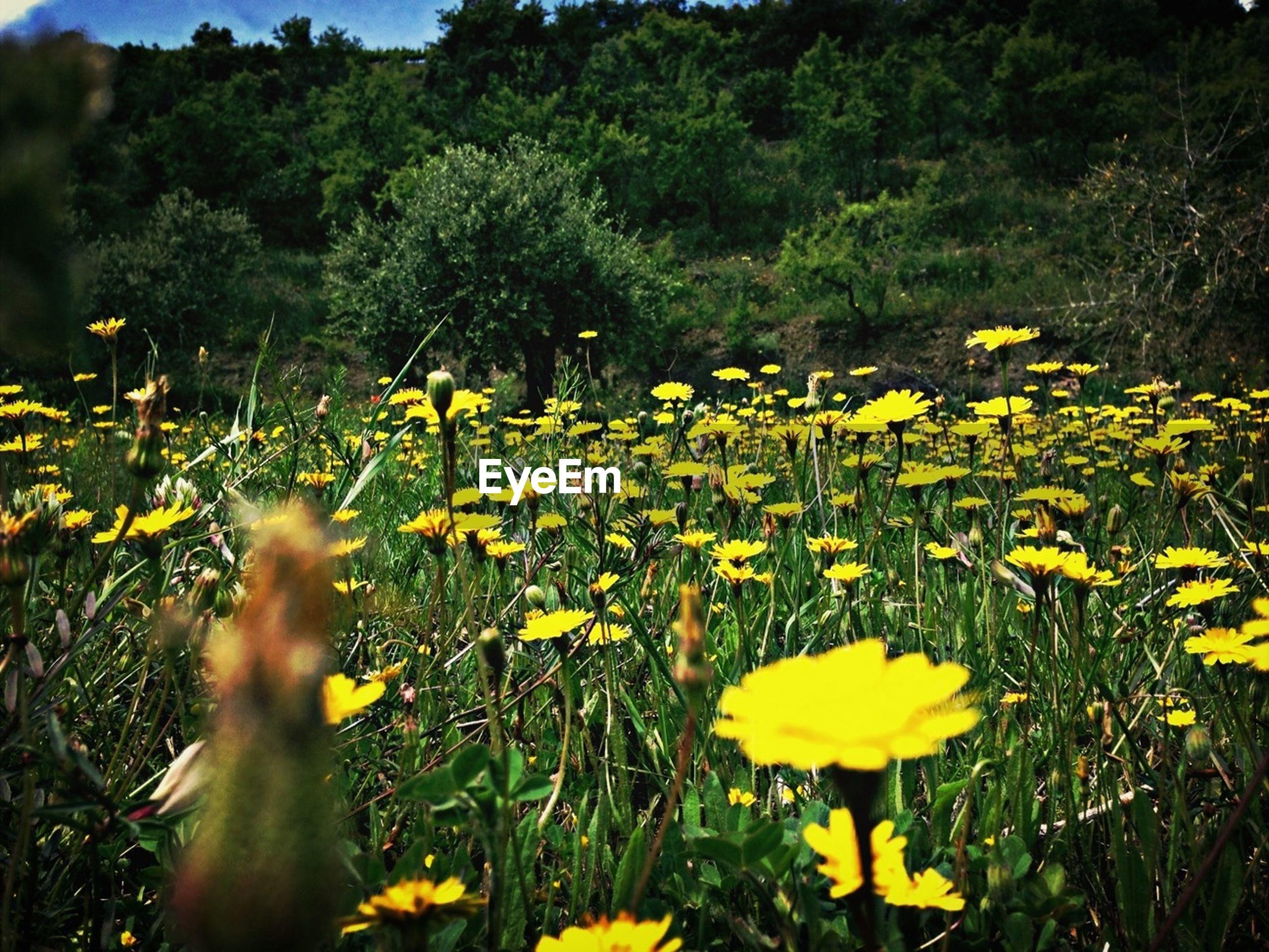 Flowers in meadow