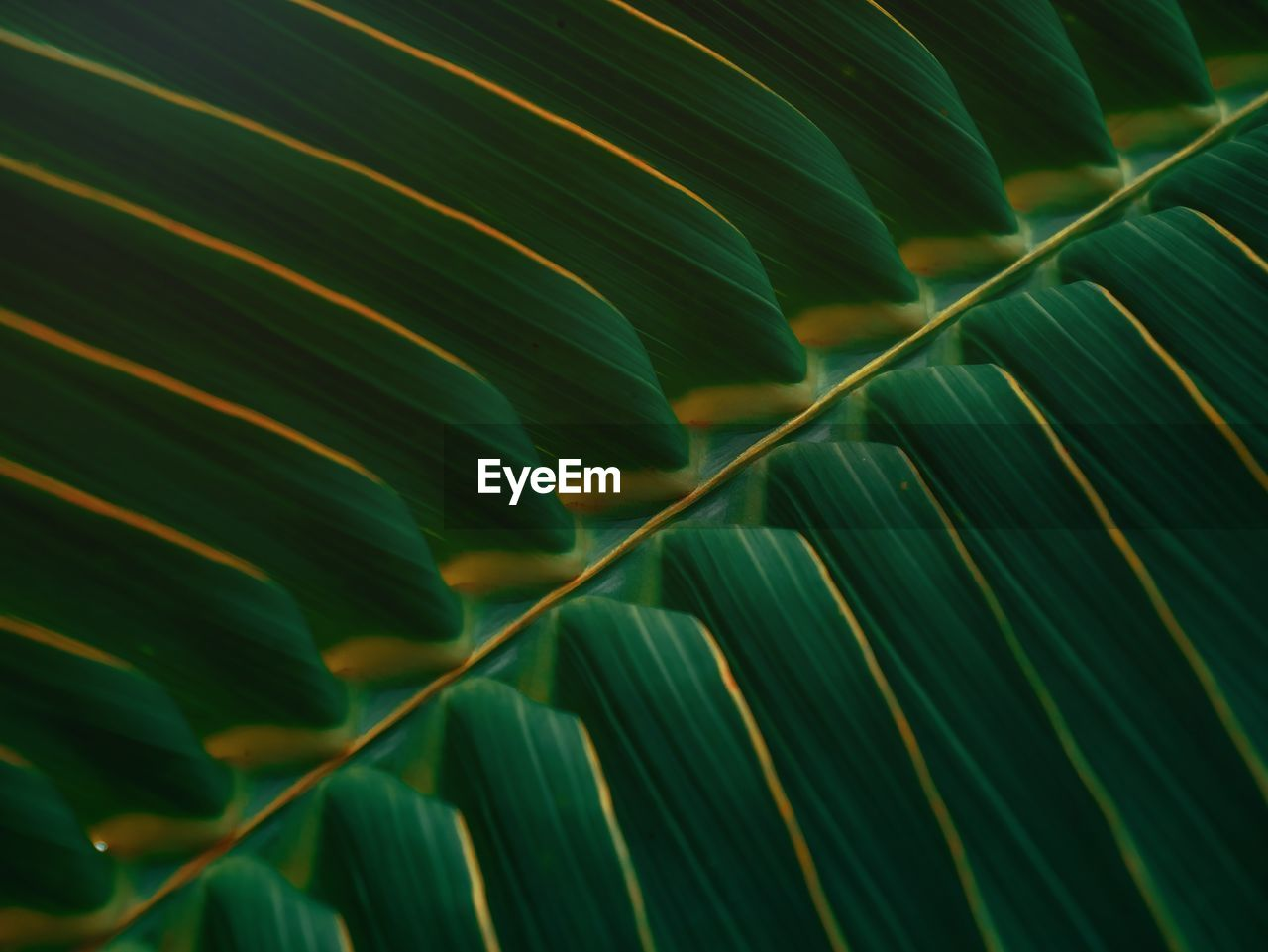 Full frame shot of coconut green leaves