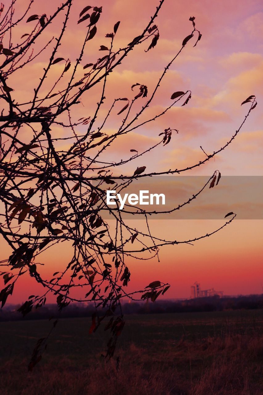 sunset, sky, nature, beauty in nature, tranquility, tranquil scene, tree, scenics, landscape, outdoors, silhouette, field, no people, branch, bare tree, day
