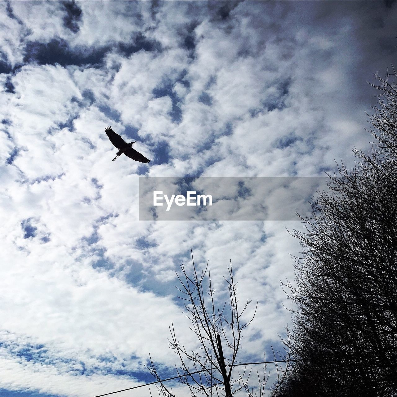 low angle view, flying, bird, animals in the wild, animal themes, cloud - sky, sky, day, nature, one animal, no people, outdoors, spread wings, animal wildlife, beauty in nature, tree