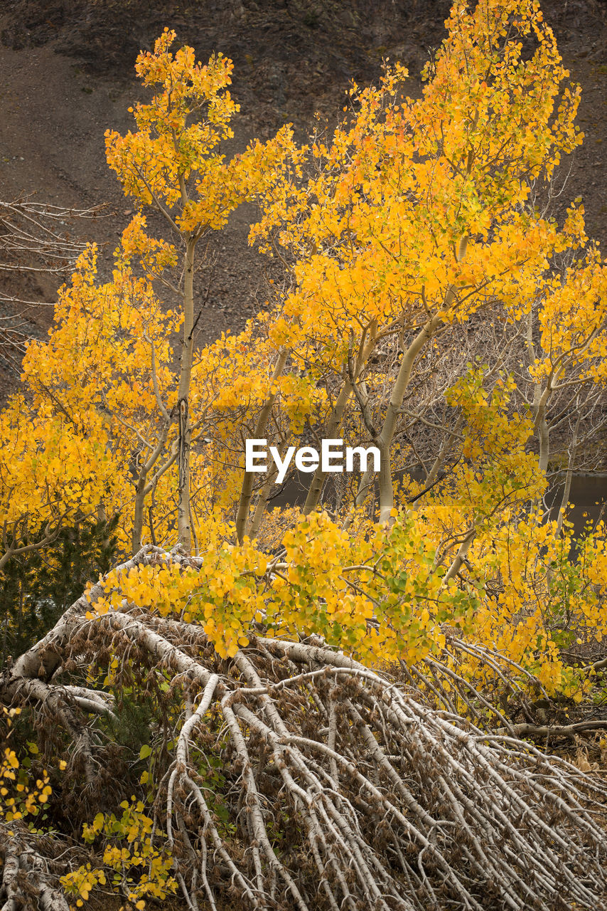 yellow, plant, beauty in nature, autumn, nature, no people, tree, land, day, growth, scenics - nature, tranquility, outdoors, forest, flower, change, landscape, environment, rock, solid, lichen, semi-arid