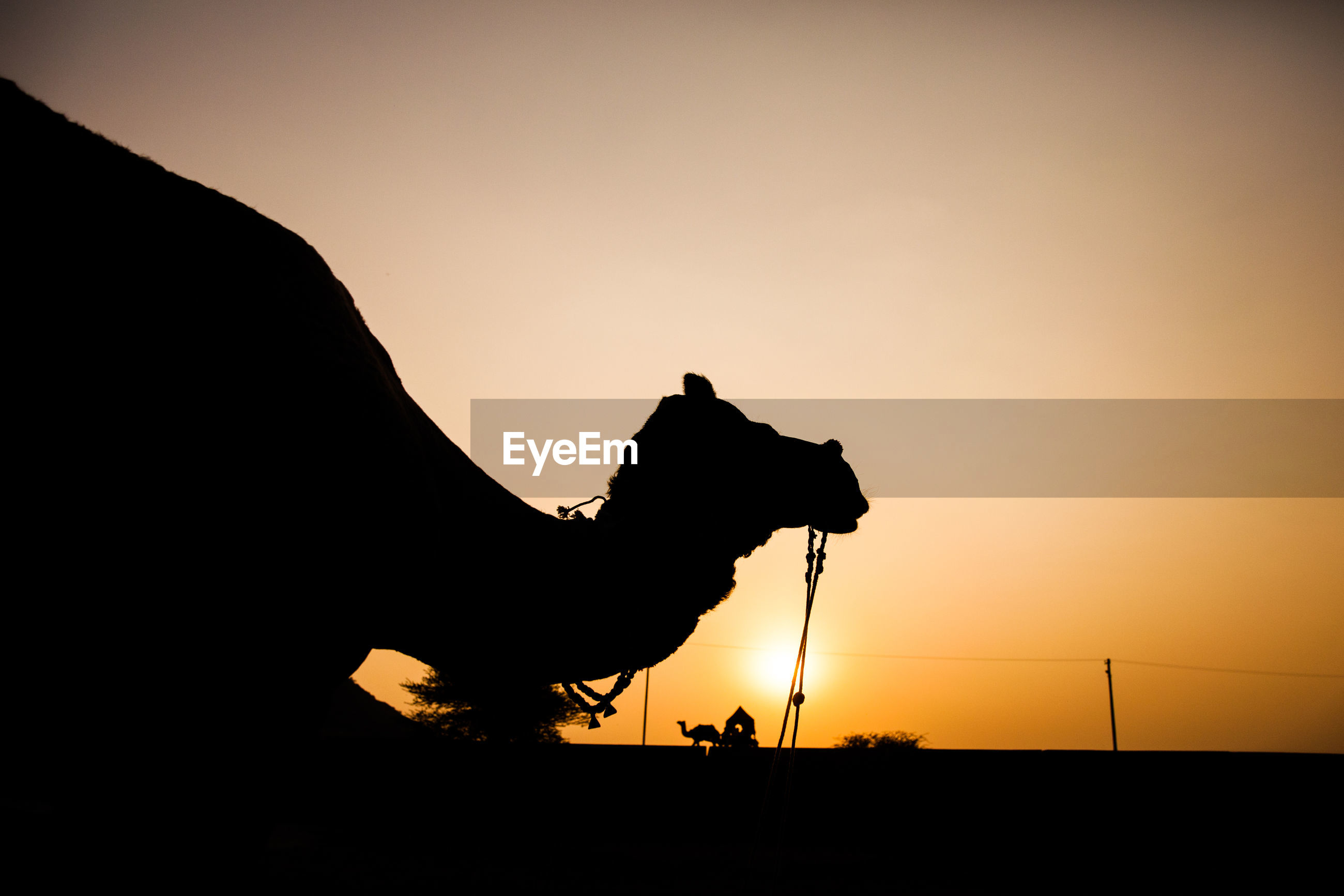 Side view of silhouette camel against clear sky during sunset