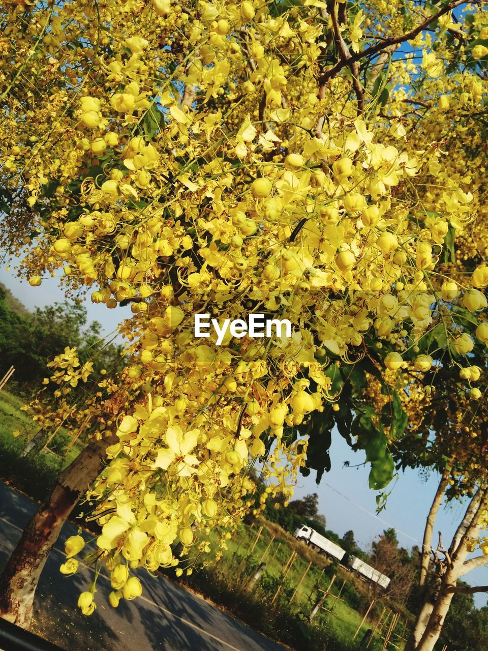 tree, growth, yellow, flower, beauty in nature, nature, branch, no people, leaf, autumn, blossom, freshness, day, outdoors, fragility, plant, close-up