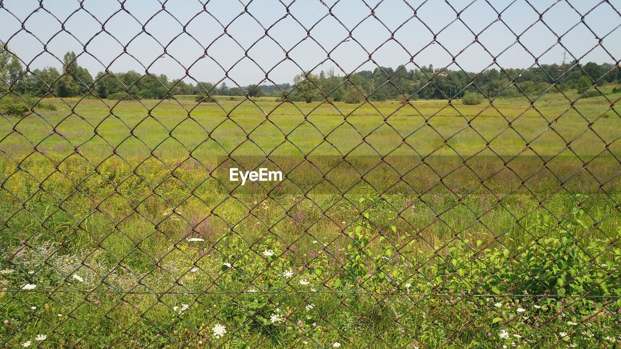 fence, chainlink fence, barrier, plant, boundary, security, protection, field, land, nature, grass, no people, safety, sky, tranquility, green color, environment, day, landscape, growth, outdoors