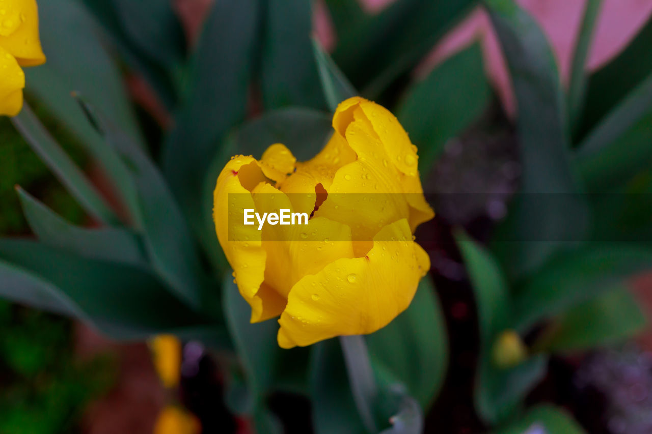 yellow, flower, petal, fragility, nature, freshness, beauty in nature, flower head, growth, plant, close-up, outdoors, blooming, no people, springtime, day, leaf